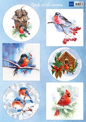 knipvel birds in the snow